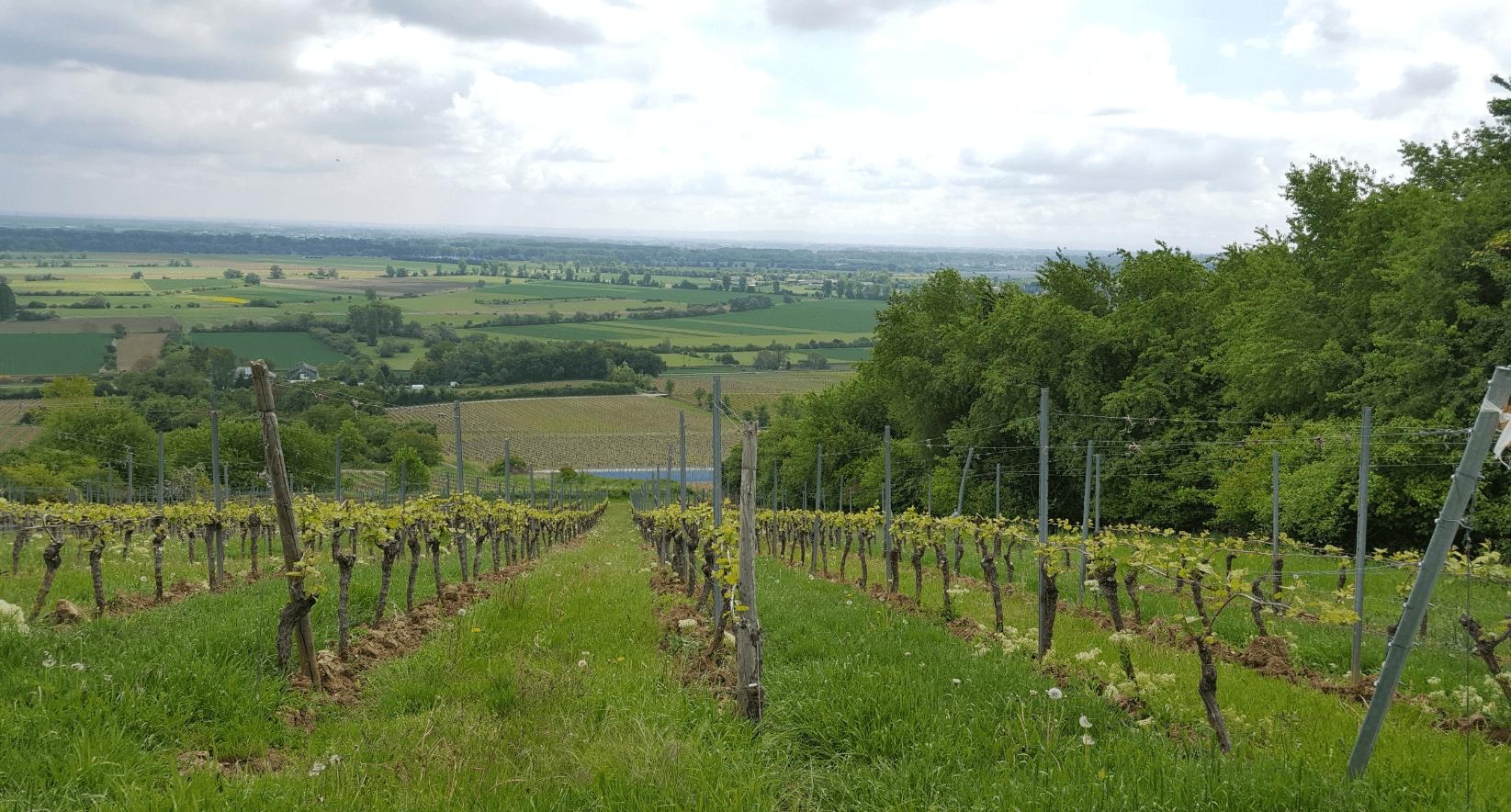 Wijngoed Zehe Clauss