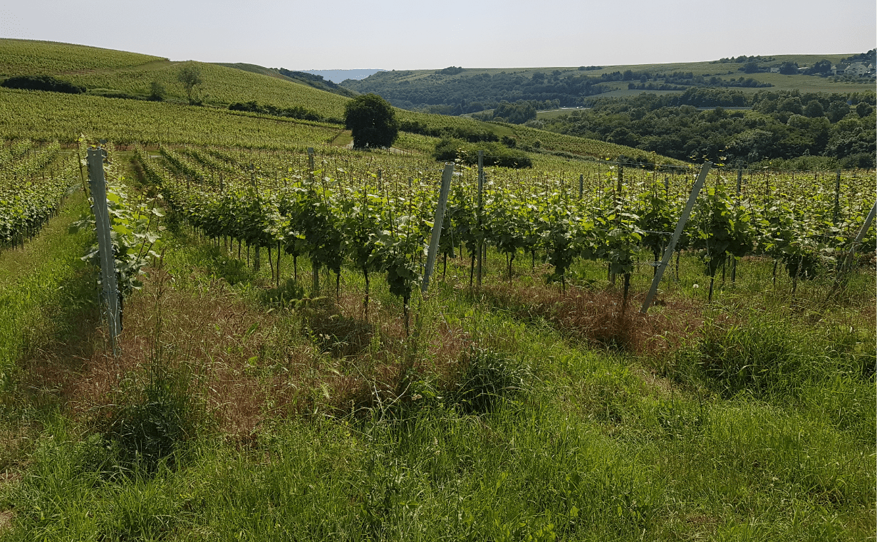 Land Forster