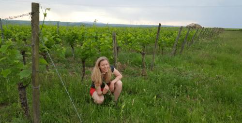 Wijngoed Schönhals